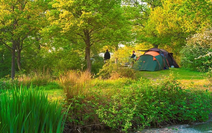 camping in the ashdown forest